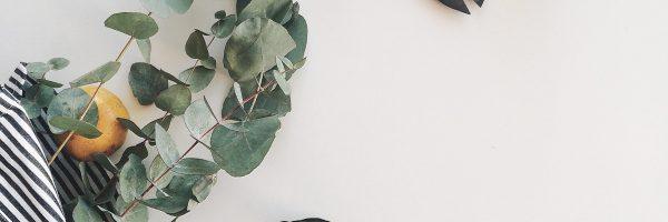 arrangement-botanical-botany-1030975